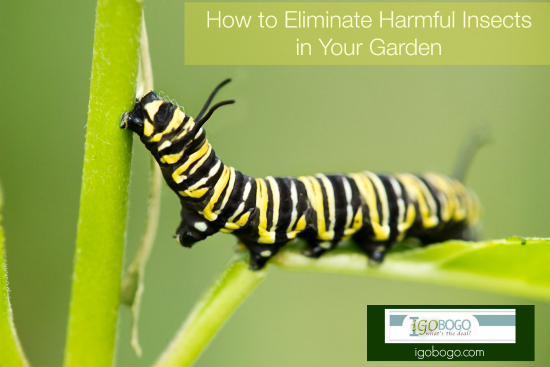 How to Eliminate Harmful Insects in Your Garden