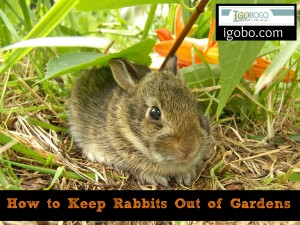 How to Keep Rabbits Out of Gardens